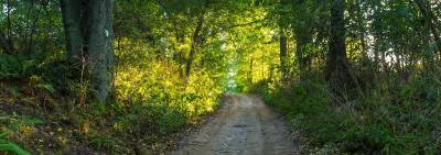 Beautiful rural road